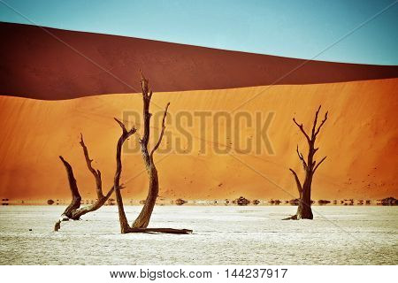 Dead Camelthorn Trees against red dunes in Deadvlei Sossusvlei. Namib-Naukluft National Park Namibia Africa. Filtered image instagram like filter applied
