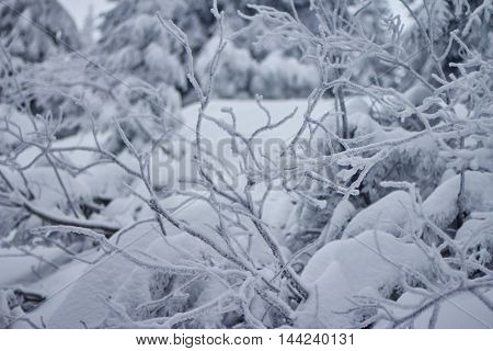 Christmas tree in snow in the mountains