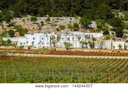 Country landscape with vineyards in Apulia Italy