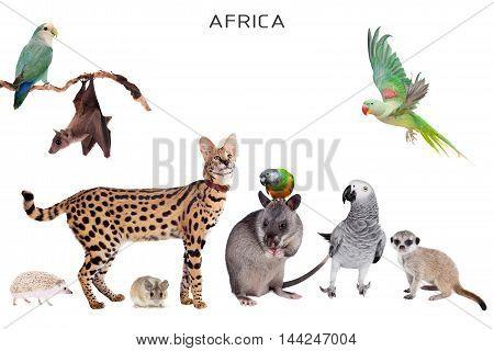 African animals set isolated on white background