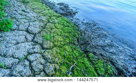 Close up of a colorful Dutch river in early morning light. In the clay soil are cracks and there are green algae on the waterfront.