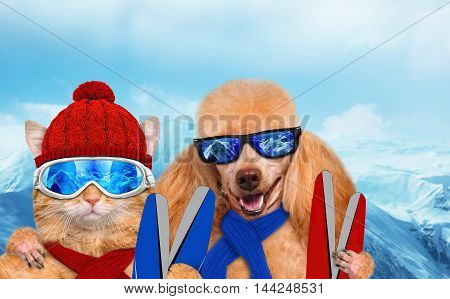 Cat and dog wearing ski goggles relaxing in the mountain.