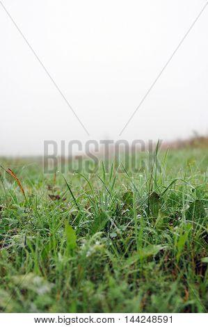 Field Plants In Beginning Of Autumn