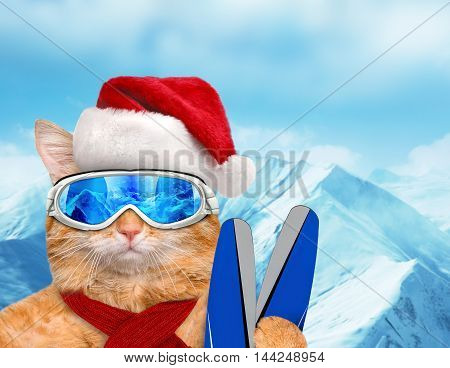 Cat skier in red Christmas hat. Cat wearing ski goggles relaxing in the mountain.