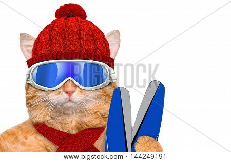 Cat wearing ski goggles . Isolated on the white.