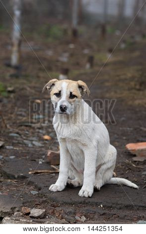 Portrait of adorable stray puppy looking with hope