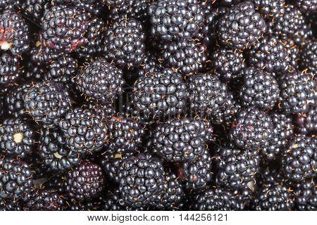 Ripe fresh blackberries close up. Rubus fruticosus