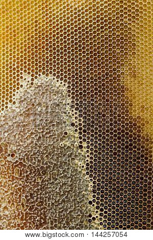 Close-up of honeycombs filled with organic honey. macro texture. top view.