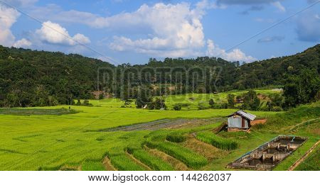 Irrigation system for paddy and fishery in harvesting season.