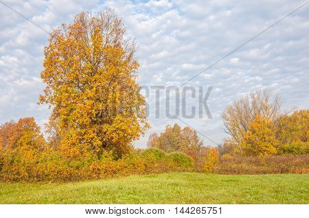 Landscape. Autumn Meadow, Colorful Yellow Trees, Beautiful Sky
