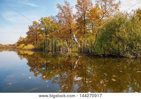 Autumn Calm On The Lake Reflection Of Trees In Water