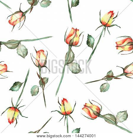 A seamless pattern with the watercolor beautiful red and yellow roses painted on a white background