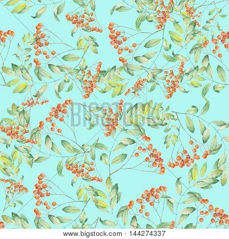 Seamless pattern of rowan painted in watercolor on a turquoise background