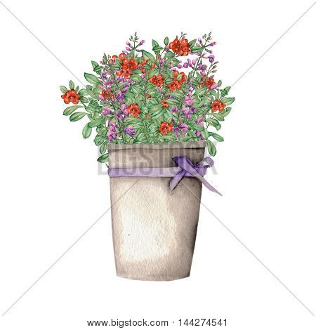 Salvia and cowberry in a bucket with a purple bow painted in watercolor on a white background