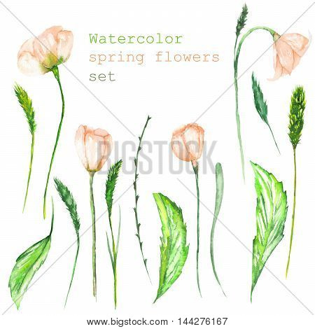 A set with the isolated floral elements in the form of watercolor spring pink flowers, blooming flowers and spikelets on a white background for a decoration