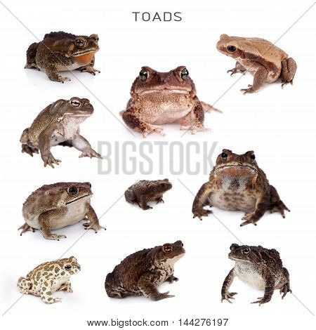 The toads set isolated on white background