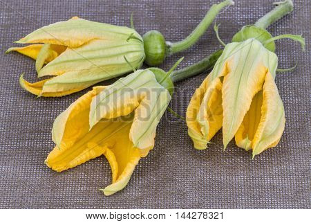 Pumpkin Flowers With Young Fruit