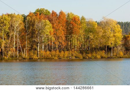 Autumn Mixed Forest Reflected In The Water Bright Colors Of Autumn Trees