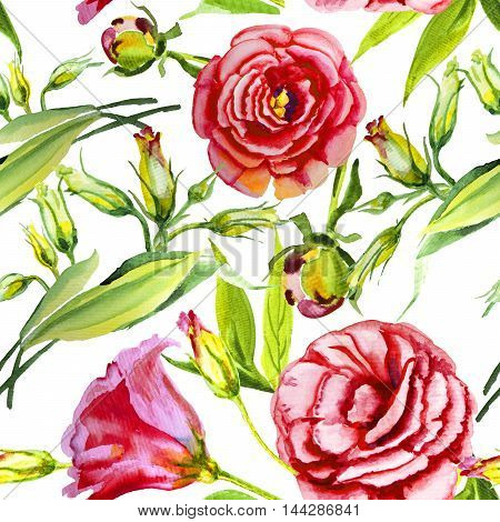 Irish rose watercolor bud isolated on white background
