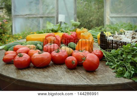 Freshly harvested vegetables. Tomatoes, cucumbers, peppers, parsley, zucchini, leeks, garlic, spinach on table near greenhouse.