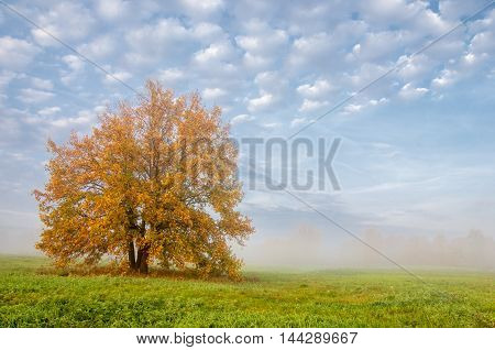 Fall Landscape. Beautiful Autumn Forest In The National Park