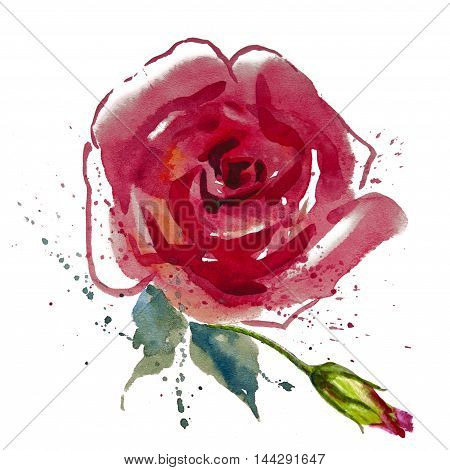 Flowers red rose with leaves watercolor illustration