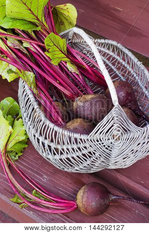 Basket of fresh harvested beetroots, beets with leaves on the bench