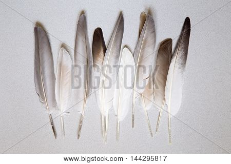 Various pigeon feathers on gray background with shadow