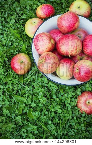 Top view of white metal bowl of red apples on grass during fall season