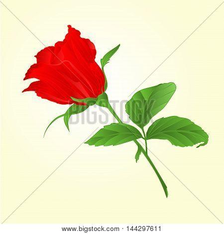 Rosebud red rose tvig with leaves vector illustration