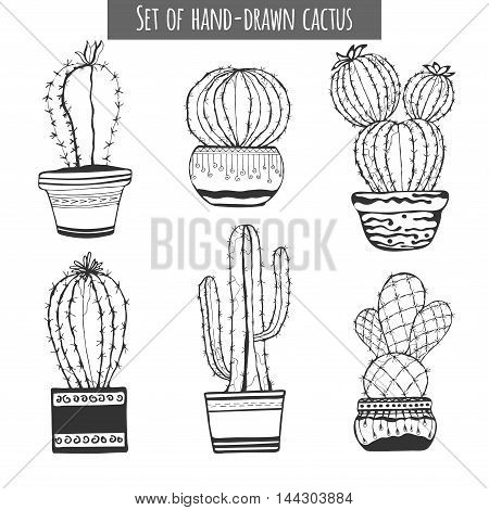 Cactus hand drawn. Set of cactus in pot isolated on white background.
