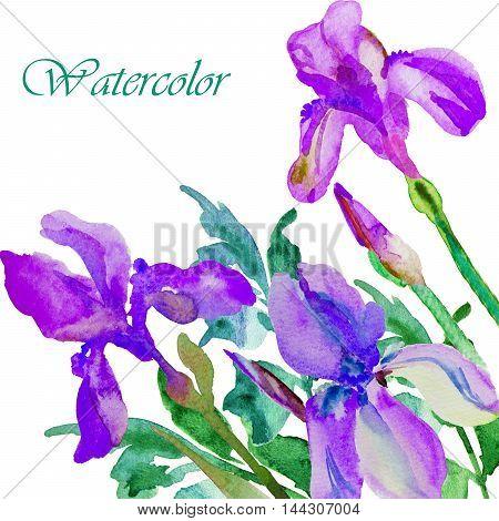 watercolor illustration Beautiful iris flower postcard hand