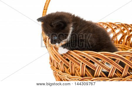 kitten in a basket on a white background
