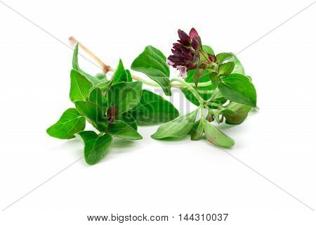 Little branch or fresh oregano isolated over white background