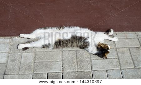 Cat resting outside in a warm Sunny day.