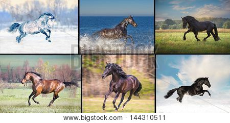 collection of the six horses on the different seasons background