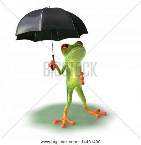 Rana de lluvia