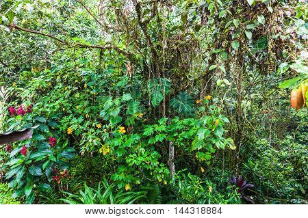 Beauty flowery corner in the Ecuadorian jungle