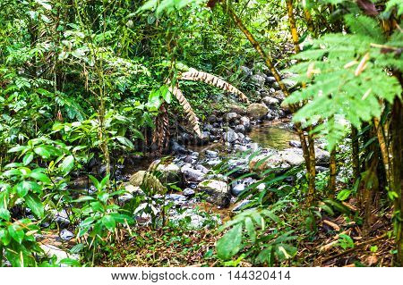 Stream of pure and crystalline water in the Ecuadorian jungle