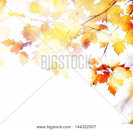 Fall, autumn, leaves background. A tree branch with autumn leaves of a maple on a blurred background.
