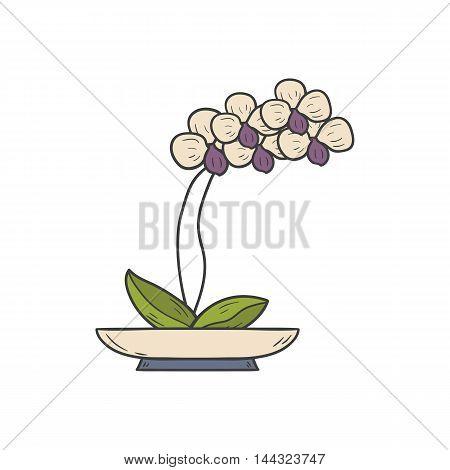 Vector illustration with cartoon hand drawn orchid flowerpot. Cartoon house plant interior design. Vector white orchid. House plant hand drawn background. Flower shop logo emblem background concept