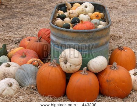 Tub Full Of Pumpkins