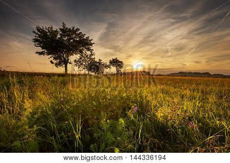 Meadow bathed in sunshine. Magical sunset and Moravian landscape Lipova.
