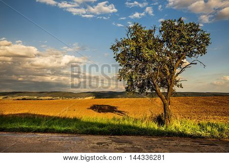 Tree by the road and field. Moravian landscape Pametice.