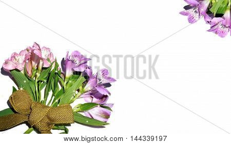 Beautiful pink and purple flowers on white background