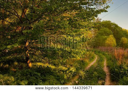 Forest path bathed in sunlight. Moravian landscape.