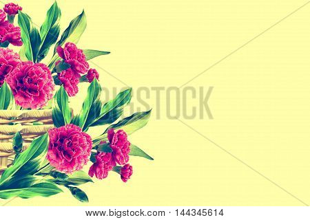 Holiday card. branch of beautiful flowers carnation