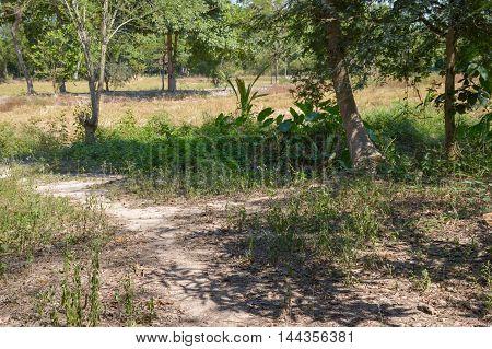 nature landscape in Nakhon nayok in Thailand
