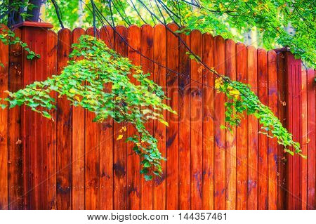 Texture of wood structure., wood, panel, textured, board,