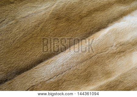 Texture, Background. Mink Fur